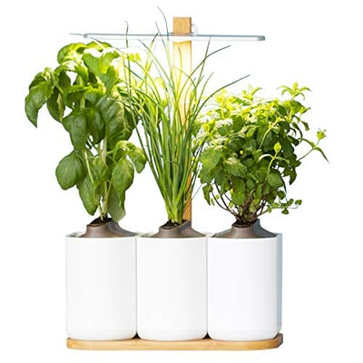 Lilo, der smarte Indoor-Kräutergarten