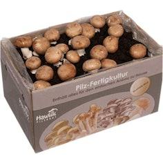 Steinchampignon Pilzkultur zum selber züchten
